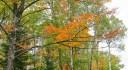 Herbst mit Laubblättern im Wald chefranden