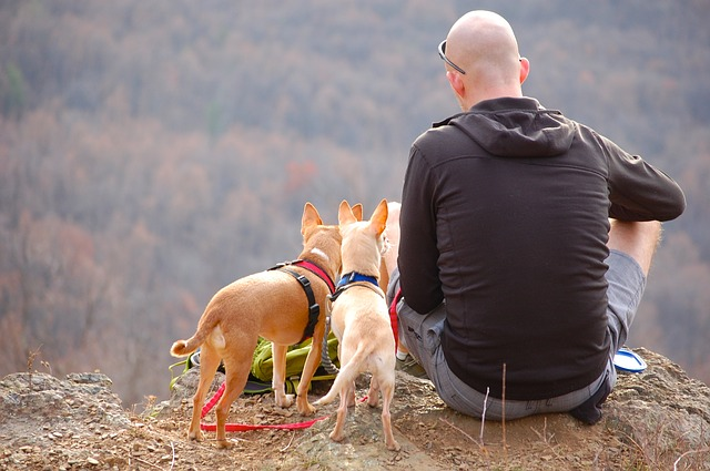 Outdoor Enjoy With Your Dog