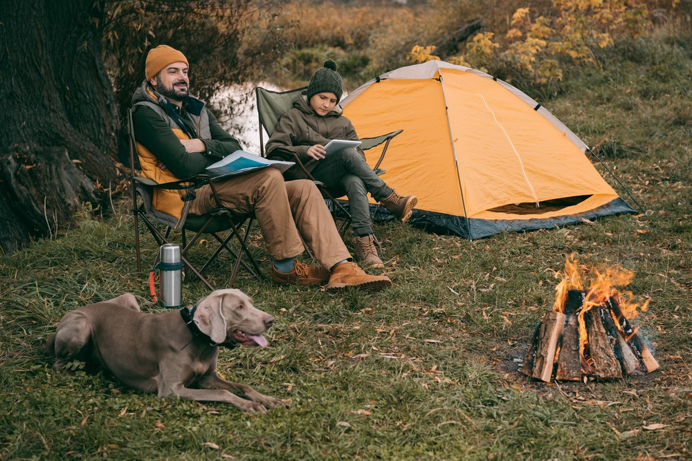 Useful tips for camping with dogs