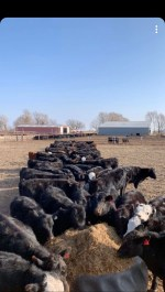 Robben Farm and Cattle