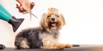 Green Paws Dog Grooming Inc