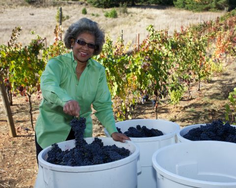 Theopolis Vineyards
