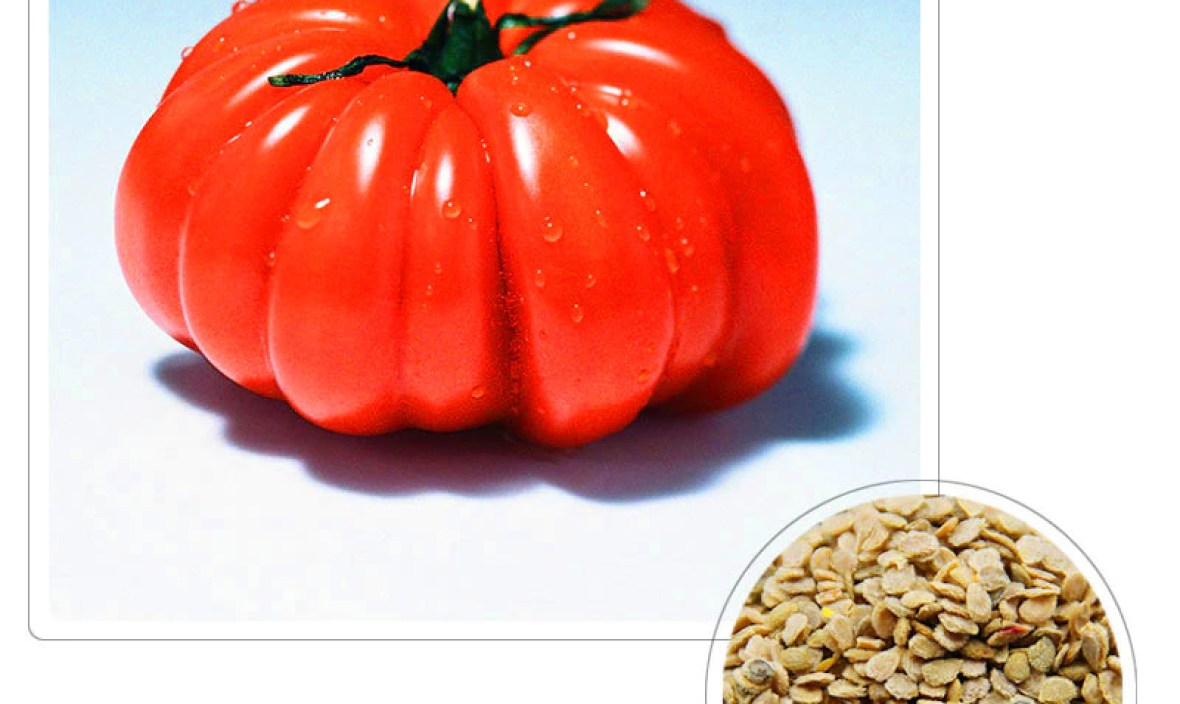 Sale!Giant Tomato Seeds,Fruits and Vegetables Potted Pumpkin Tomato Seeds Balcony for Home Garden 100 pcs/lot,#9B3EDG