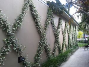 A Relatively Easy Landscaping Fix for a Big Blank Boring Wall is Espaliered Jasmine Vines. A Dog (or Cat) Accent is Optional but Highly Recommended for Any Home