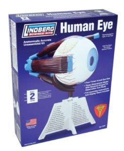 ShoppingGirls seeking a science project for a report or fair may wish to look at this Human Eye Model Kit. You see, you can gain insight into human vision, see the structure of the eye more clearly, and envision how everything works by assembling and then gifting this model to someone you would like to creep out. Mcphee.com.
