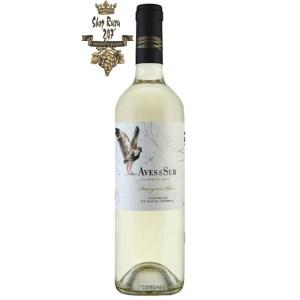 Vang Chile Aves Del Sure Clasico trắng khi nhìn sẽ thấy có màu trắng, vàng nhạt hấp dẫn. Rượu mang hương thơm của các loại quả
