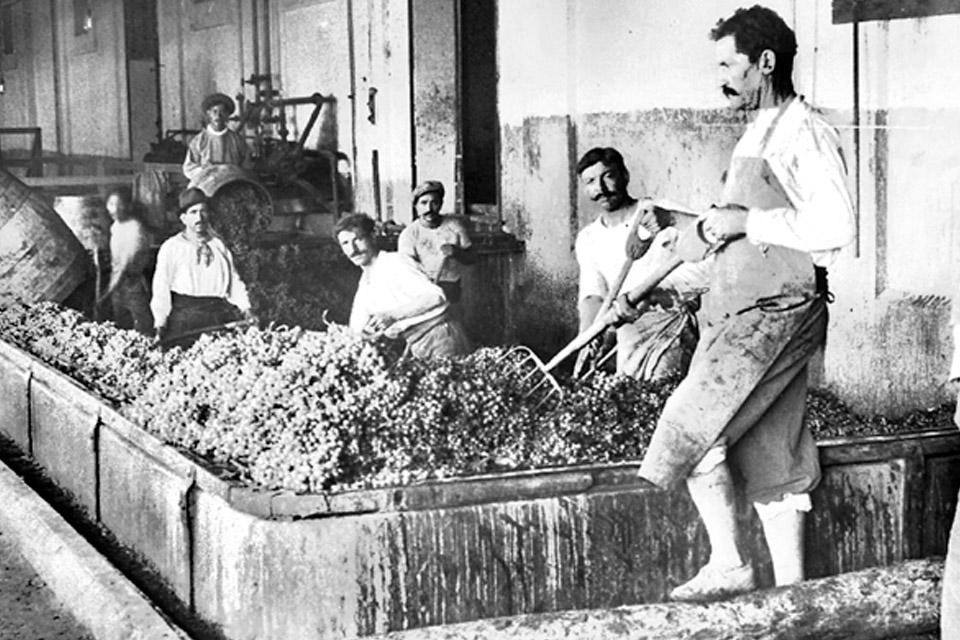 Bức ảnh lịch sử rượu vang pháp