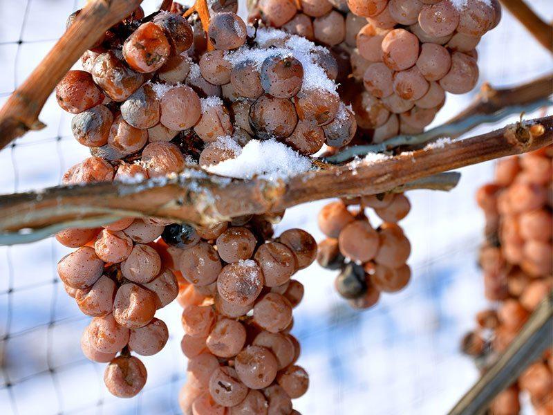 ice wine 3