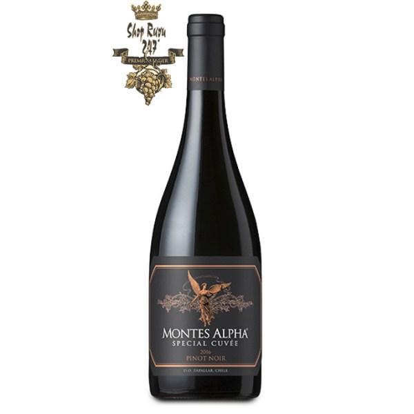 Vang Chile Montes Alpha Special Cuvee Pinot Noir có mầu đỏ anh đào sâu đậm. Hương thơm của quả mọng mầu đỏ và xanh