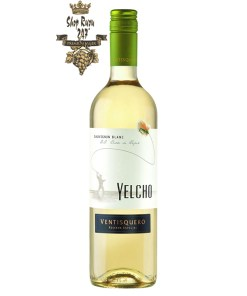 Ventisquero Yelcho Sauvignon Blanc có mầu xanh nhạt. Hương thơm pha trộn của cam quýt và trái cây nhiệt đới như chanh, bưởi, dứa, lê