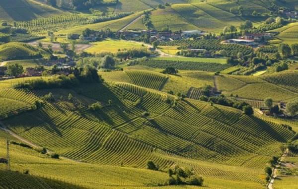 Vùng Piedmont phía bắc của Ý sản xuất một số loại rượu vang đỏ nổi tiếng nhất của đất nước: Barolo và Barbaresco