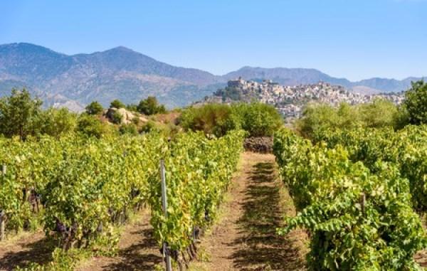 Là hòn đảo lớn nhất ở Địa Trung Hải, Sicily có điều kiện hoàn hảo để trồng nho và trên thực tế