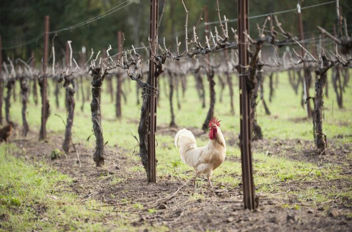 Rượu vang sinh học là rượu vang được sản xuất theo phương pháp động lực học sinh học đại diện