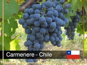 Carménère là một giống nho đỏ tạo ra một loại rượu vang có hương tiêu xanh đậm và gợi nhớ đến Cabernet sauvignon