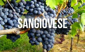 Sangiovese là loại nho nổi tiếng nhất và được trồng rộng rãi nhất ở Ý. Tinh tế hơn các loại rượu vang đỏ khác