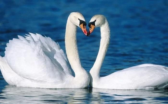 животные, у которых можно поучиться верности 2