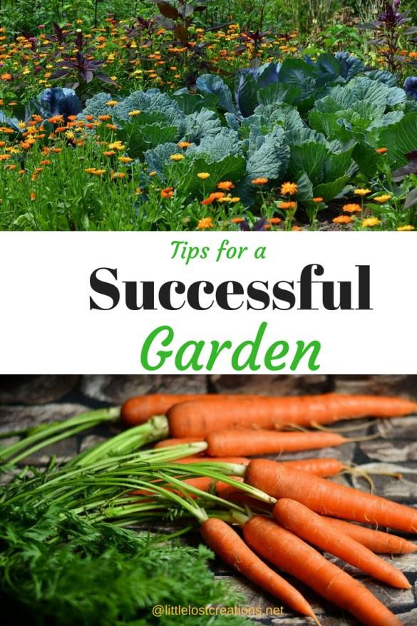 Gardening, Where Do You Start? A Beginners Guide For Gardening