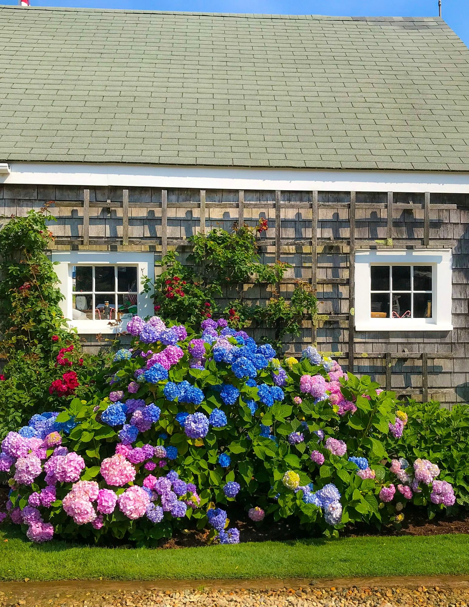Nantucket Hydrangeas-26