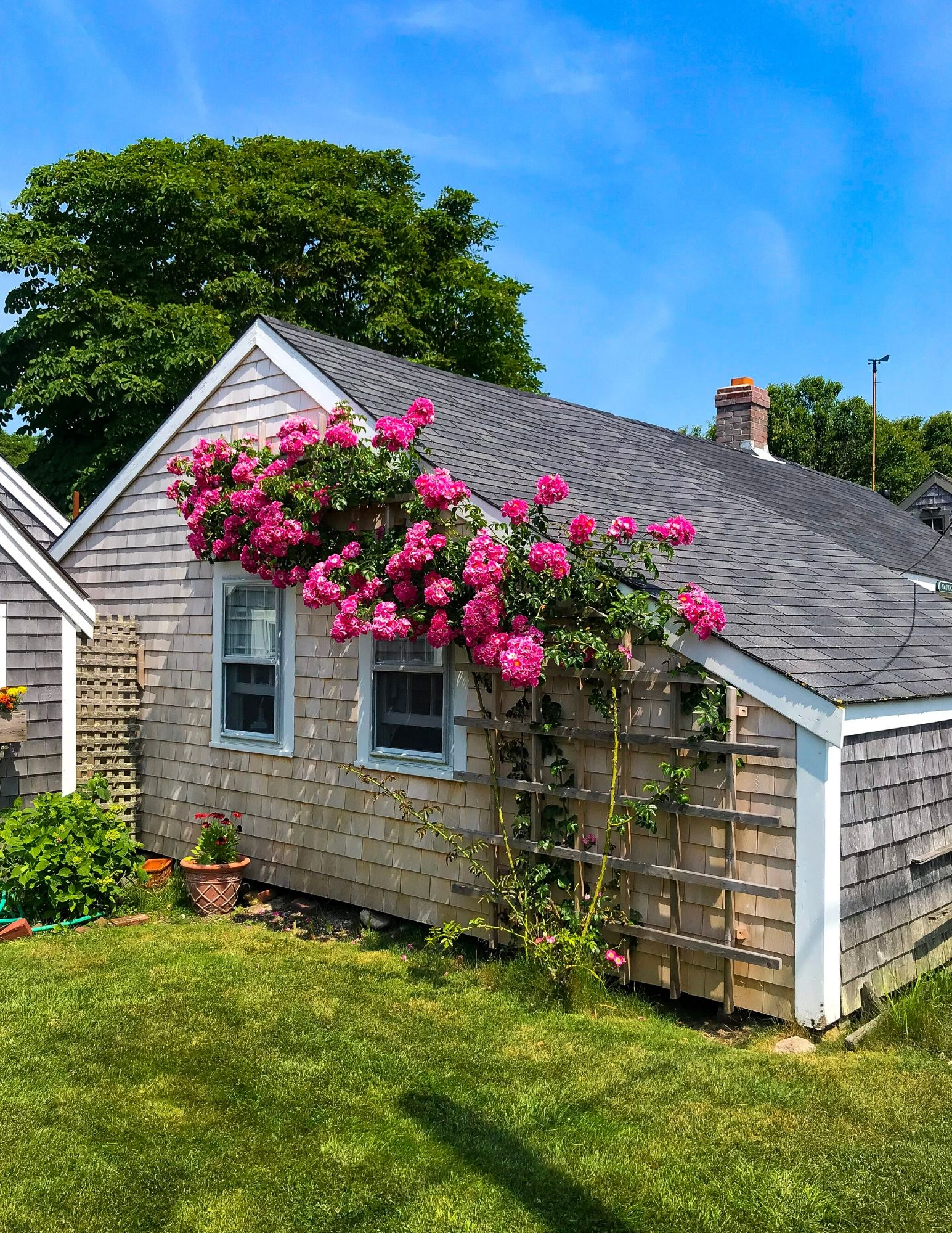Nantucket Rose Covered Cottages in Sconset-18