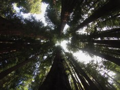 Gopro redwoods state park