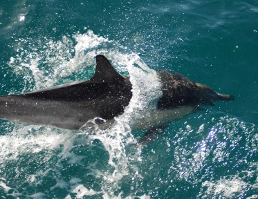 Dolphin Watching (15)