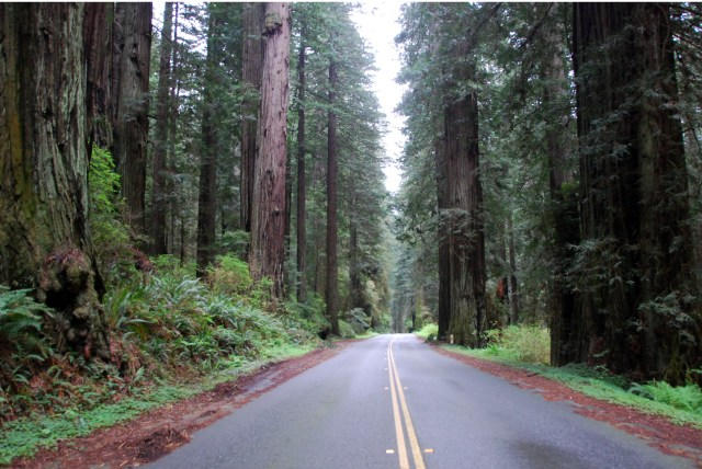 Redwood Highway (18)