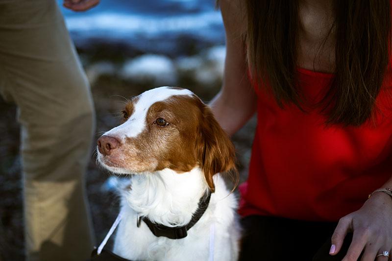 Gulf Shores Engagement Photography Orange Beach Engagement Portraits Beach Portraits