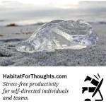 HabitatForThoughts-jellyfish (MailPoet)