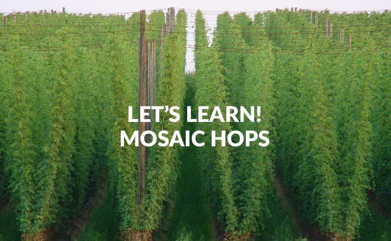 What Are Mosaic Hops how are they used in brewing beer