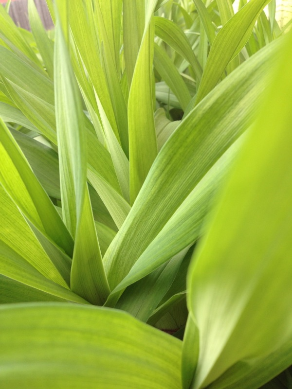 green things - shorts and longs - julie rybarczyk 02