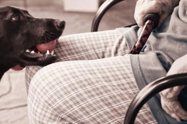 Intervenciones en el ámbito geriátrico