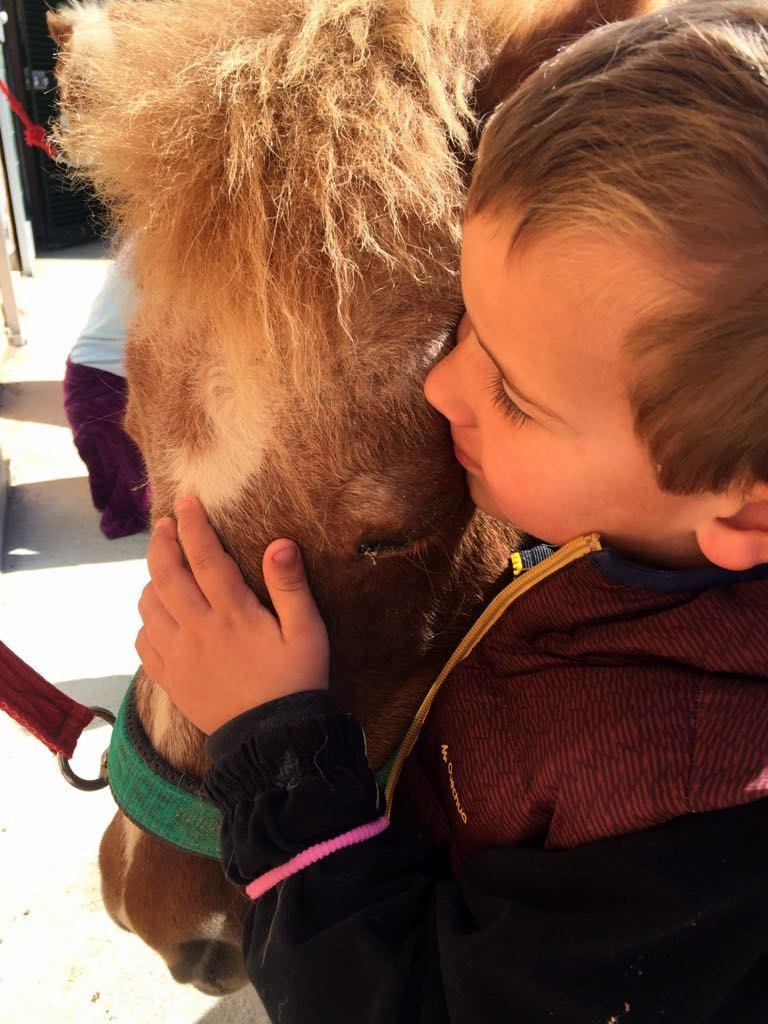 KIDS & Ponies, KIDS & Dogs, actividad para niños de 3 a 5 años