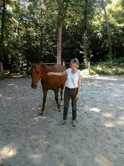 Shortways Team Building : Horse Coaching à Gondin
