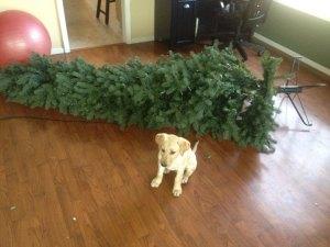 Puppy 1: Tree 0
