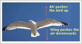 flying-bird-newton-third-law-of-motion