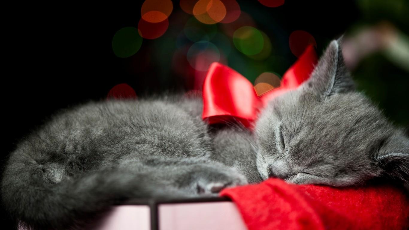 Ce ne spune coada unei pisici?