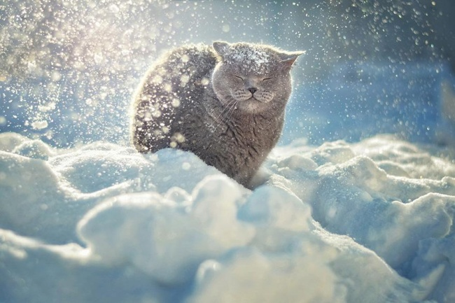 Despre cat de tare adoram iarna