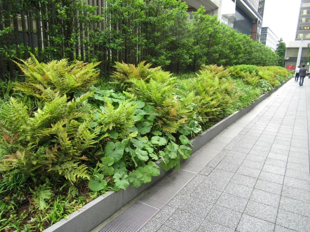 都市部の乾燥に強く暗い場所の植栽。ドライシェードガーデンの良い例。