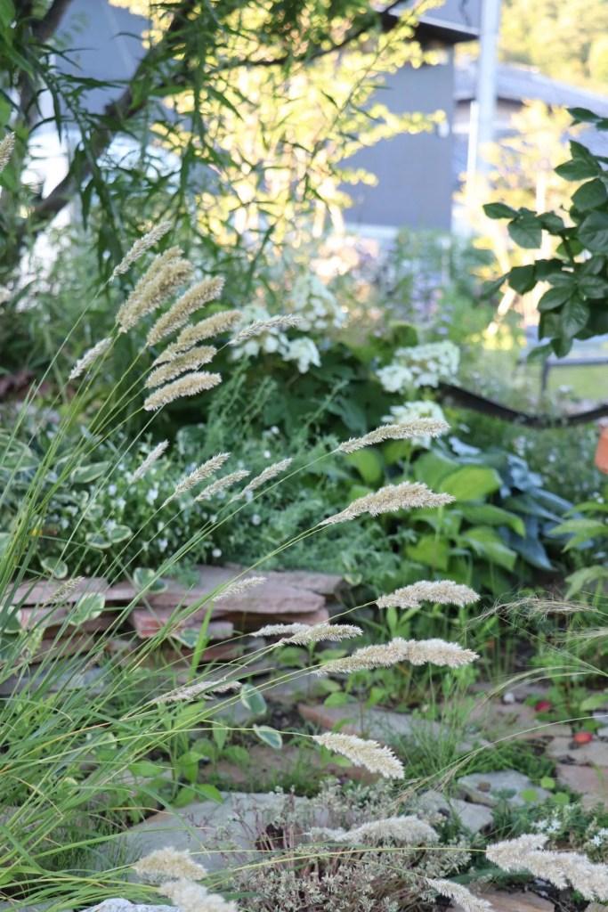 メリカの植栽例