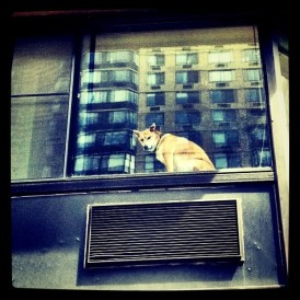 It's a dogs world after all #photography #iphoneogrphy