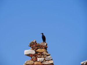 lake bafa bird