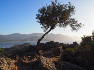 Lake bafa tree