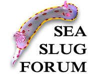 sea slug link picture