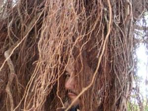 奄美大島南部・油井岳展望台(油井岳園地)そばのガジュマルの木