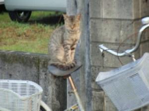 自転車サドルの上に猫