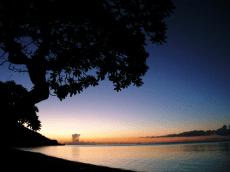 南の島の海と樹