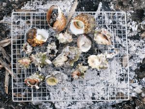 南国の貝類