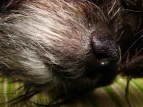 奄美大島・古仁屋の宿「昭和荘」の犬