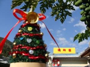 奄美格安宿昭和荘とクリスマスツリー