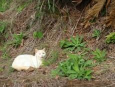 奄美瀬戸崎灯台でキャンプする猫